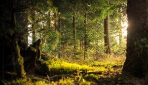 dejlig grøn skov